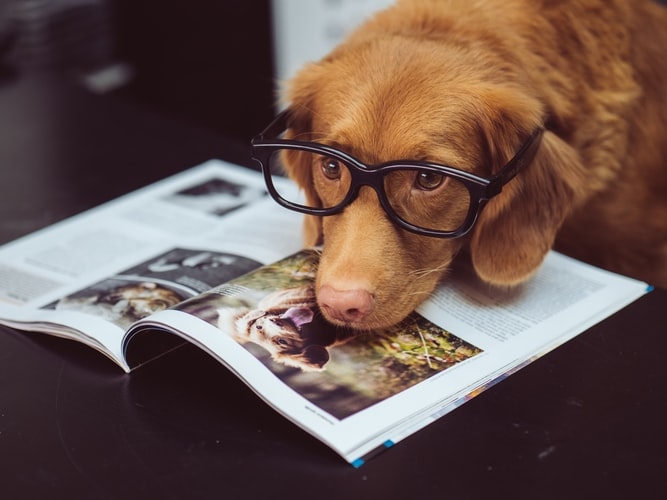 should i get a dog in medical school